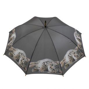 Regenschirm tabby liegend