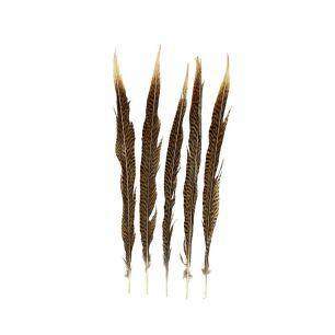 Feder fasan gold 38cm (5st.)