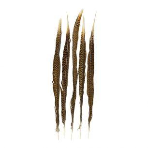 Feder fasan gold 50cm (5st.)