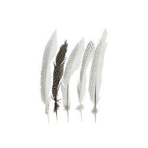 Feder fasan silber 28cm (5st.)