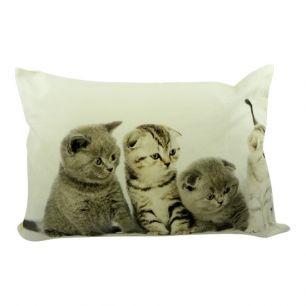 Kanevas kissen kätzchen britisch kurzhaar 4 35x50cm
