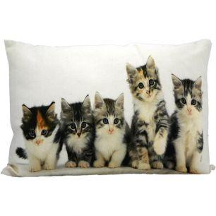 Kanevas kissen kätzchen 35x50cm
